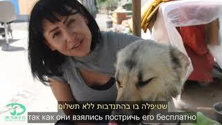 Становление Приюта для кошек В Бат Яме FAZENDA הקמת בית מחסה לחתולים בבת ים