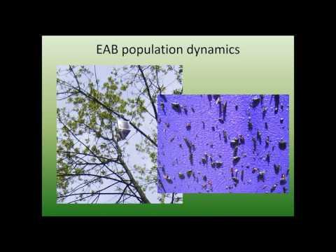 EAB population & damage dynamics 3 24 16