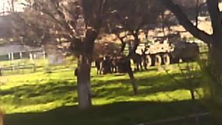 """Захват ВЧ """"БЕЛЬБЕК"""": рос войска все же стреляли"""