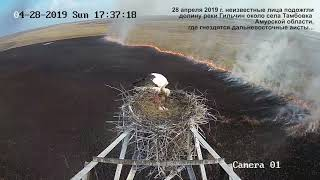 Пожар в долине реки Гильчин, где гнездятся аисты. Видео с веб-камеры.
