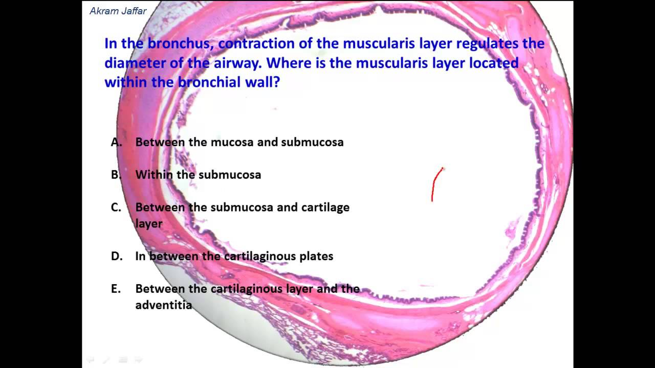 What Are The Histological Differences Between Trachea And Bronchus
