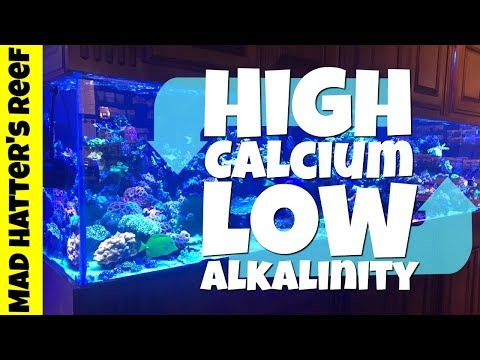 How To Fix High Calcium And Low Alkalinity