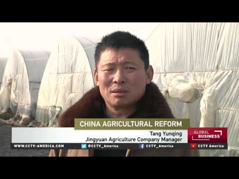 New tech reforms in China's agriculture look to modernize market