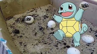 Baby turtle born - nascita tartaruga di terra
