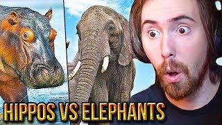 Asmongold Reacts To Are Hippos & Elephants OP? | TierZoo