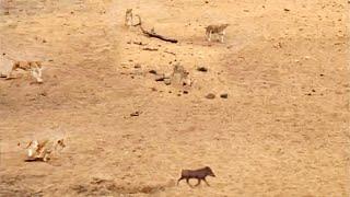 Warthog Doesn