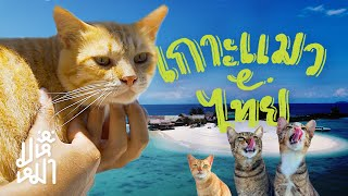 (EN) Cat Island in Thailand