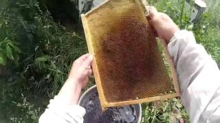 Действие пепла на моль в медовых рамках, хранение медовых рамок