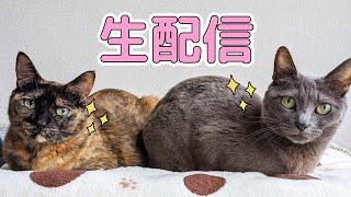 猫4匹シャンプー終わった記念生配信!