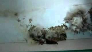 видео Бизнес на реставрации подушек