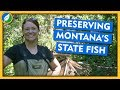 Preserving Montana's State Fish - Field Trip