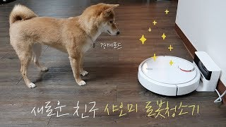 xiaomi robot cleaner shibainu dog reaction
