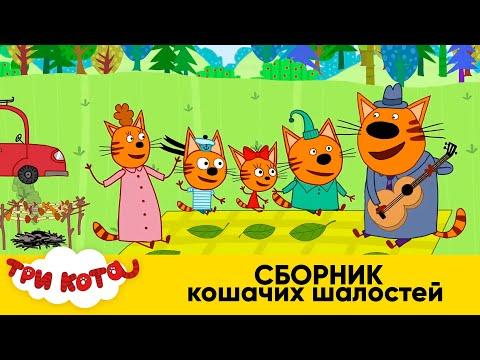 Три Кота | Сборник Кошачьих Шалостей | Мультфильмы для детей 2020 - Видео онлайн