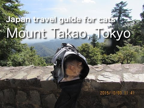 Mount Takao in Tokyo | Japan travel guide for cats