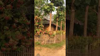 태국 빠이 숙소 Thailand Pai Bannamho…