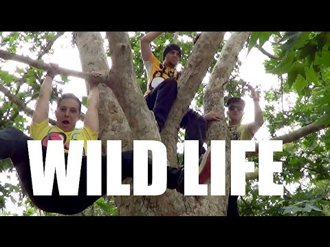 WILD LIFE - Jack & Jack Dance Choreography | Luke Walker NeWest