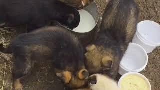 Трое из восьми оставшихся без мамы щенков обрели новый дом благодаря «Блокноту Волгограда»