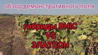 Обзор демо-поля гибридов подсолнечника от украинского производителя семян компании ВНІС.