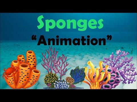 SPONGES | Biology Animation
