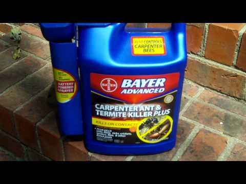 Bayer Carpenter Ant Killer Product Demonstration Using Kodak Zi6 Hd Flip Camera Youtube