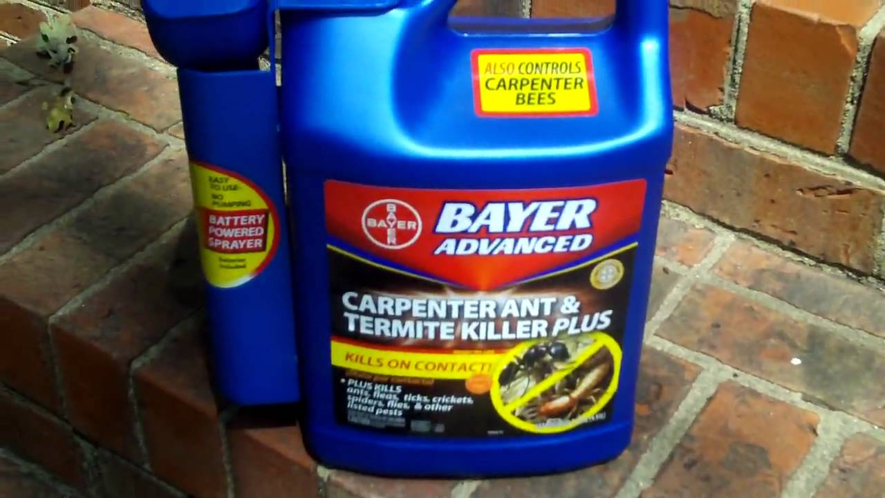 Bayer Carpenter Ant Killer Product Demonstration Using Kodak Zi6 Hd Flip Camera Youtube