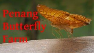 Penang Butterfly Farm Thumbnail