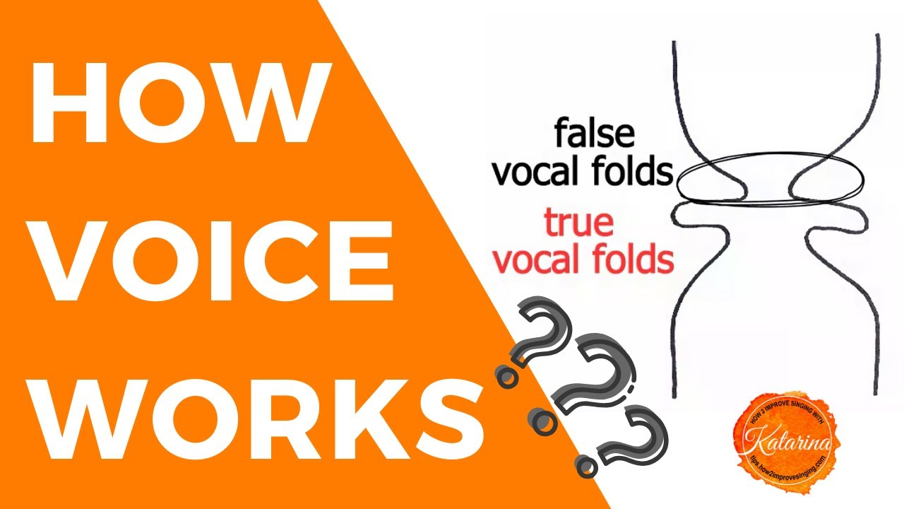 How Voice Works: Anatomy and Physiology of Voice - YouTube