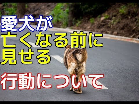 【愛犬のための知識】愛犬が亡くなる前に見せる行動について【犬を知る】