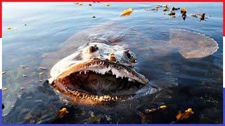 Top 10 Gevaarlijkste Oceaan Monsters!