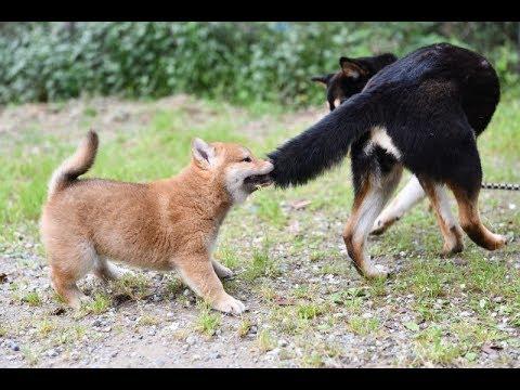 噛む 子犬 尻尾