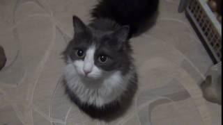 Кошки с огромными глазами