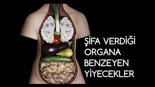 Şifa Verdiği Organa Benzeyen Yiyecekler