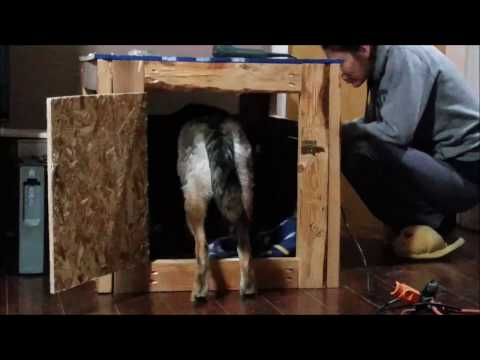 DIY Dog Kennel Using Free Pallets and $5 worth of plywood