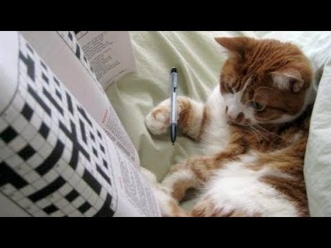 I CHALLENGE YOU to try and STOP LAUGHING! - Funny CAT compilation