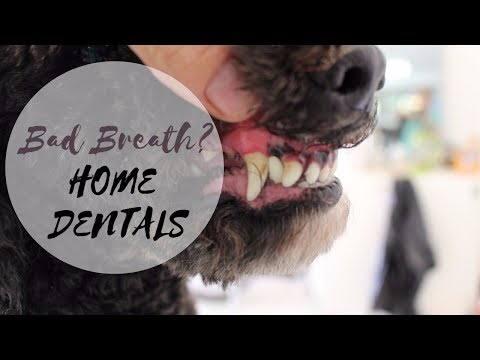 Bad Breath? Clean Your Dog's Teeth At Home