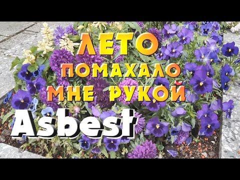 Лето машет нам,пока! город Асбест.Улицы Асбеста.City Asbest.Цветущий Асбест