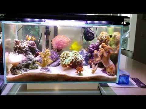Fluval Edge 6 gallon nano saltwater reef fish tank **FULLY PACKED** - Nov 3, 2013