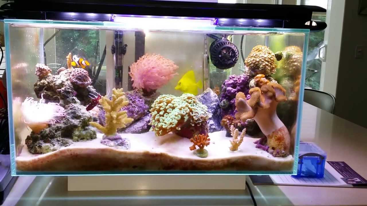 Aquarium nano fish tank - Fluval Edge 6 Gallon Nano Saltwater Reef Fish Tank Fully Packed Nov 3 2013 Youtube