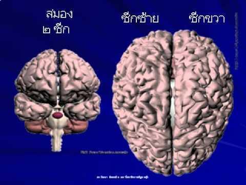 สมองกับการเรียนรู้.flv