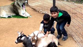 San Antonio Zoo Holiday Special Compilation /Feeding animal/Tiger Playing/Lion Yawning/Wild Animals