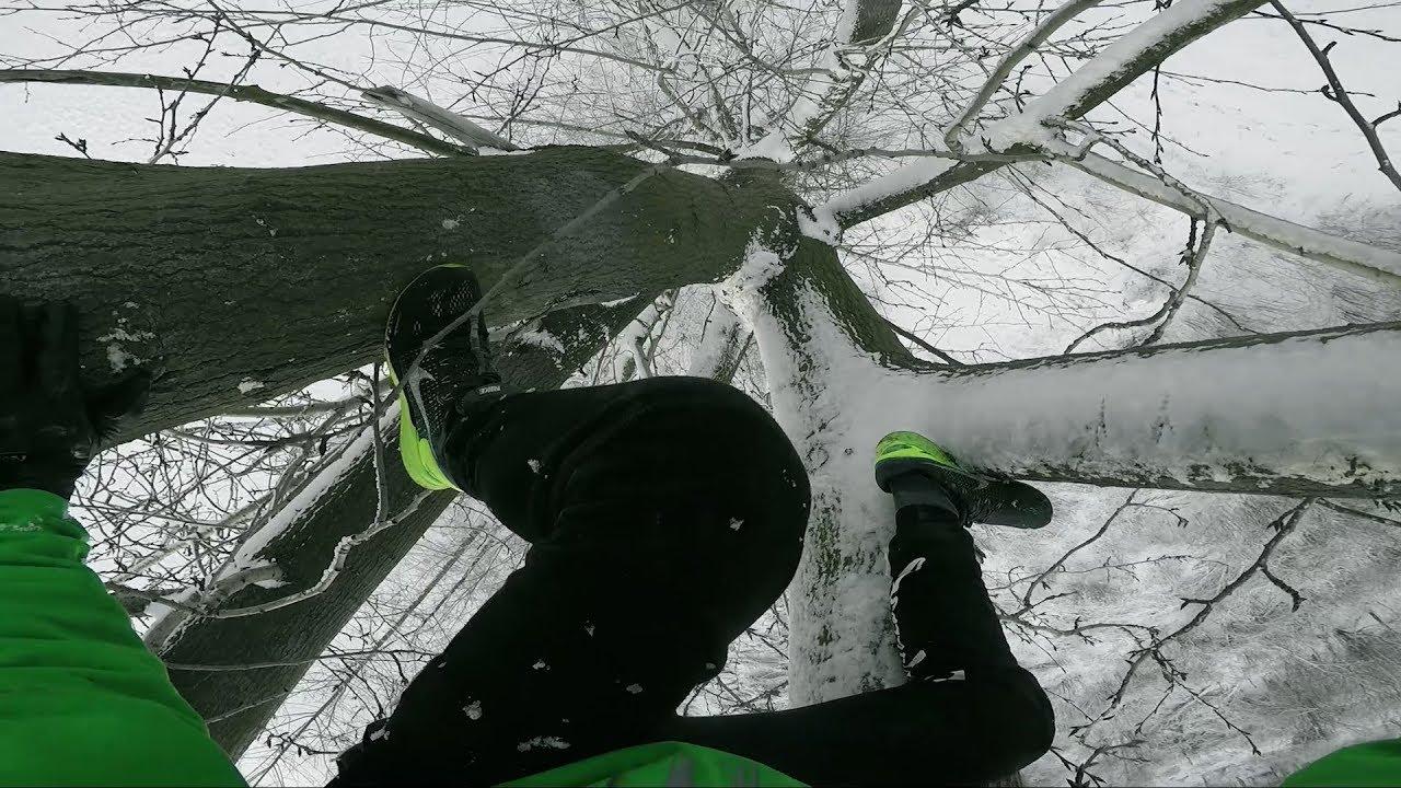 BNT 177 Odchyły na drzewie  Q&A