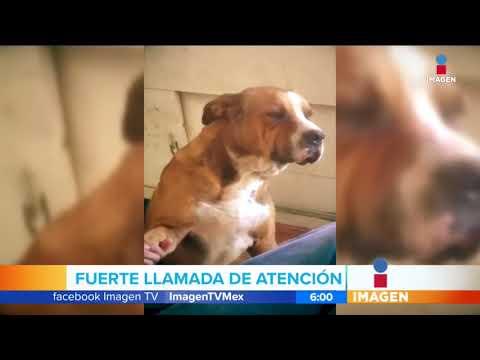 Perrito recibe regaño por 'andar de vago' | Noticias con Francisco Zea