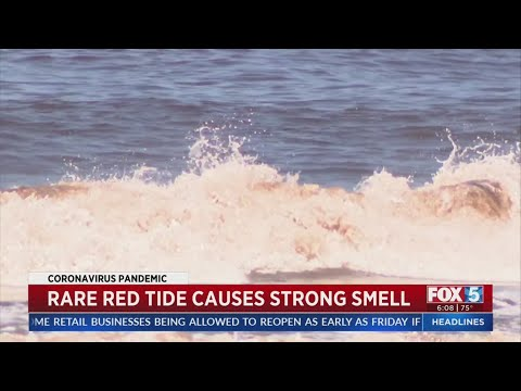 Rare Red Tide Causes Strong Smell