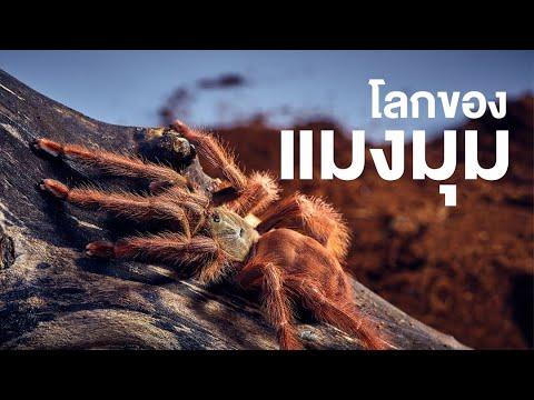 สารคดี สำรวจโลก ตอน โลกของแมงมุม
