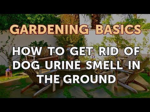 How To Get Rid Of Dog Urine Smell In The Ground