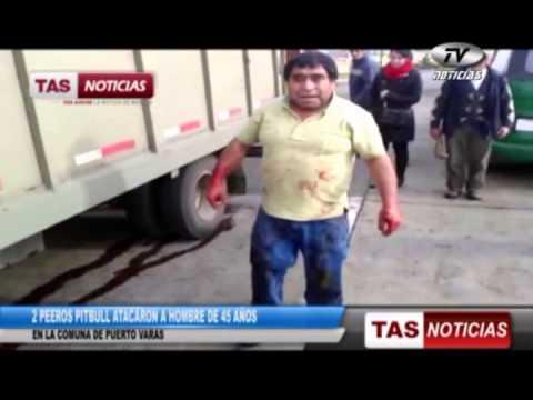 Ver Video de Pitbull 2 perros pitbull atacan a hombre en Puero Varas (12-07-2013)