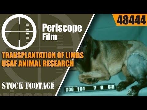 TRANSPLANTATION OF LIMBS USAF ANIMAL RESEARCH w/ DOGS TESTING PROGRAM HISTORIC FILM 48444