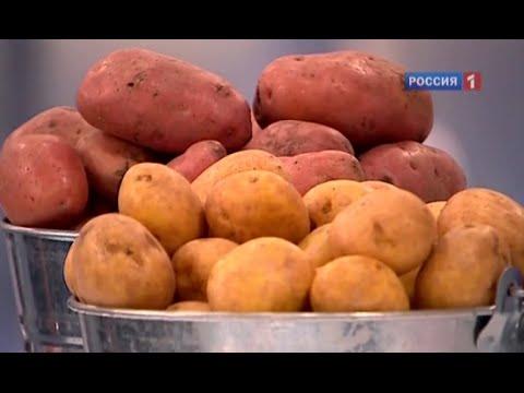 Зубатка рецепты - rus-food-