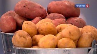 Картофель - польза и вред. Описание, калорийность и характеристика картофеля