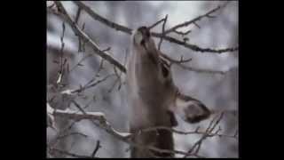 Маршрутный учет численности охотничьих  животных